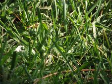 Free Grassroots Grass Png Grasshoppers FGrassroots C Grass Seed Stock Image - 196286111