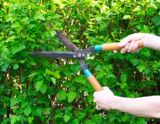 Free Hands Are Cut Bush With Clippers Stock Image - 19630701