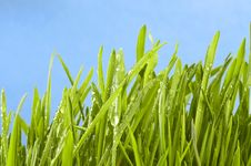 Free Fresh Grass On Green Royalty Free Stock Photo - 19631445