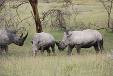 Free Rhinoceros Stock Images - 19631744