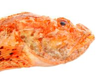 Free Red Fish Stock Image - 19632561