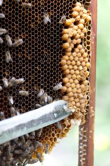 Free Beekeeper At Work Royalty Free Stock Photos - 19633058