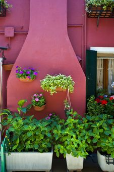 Free Pink Patio And Garden, Burano, Italy Royalty Free Stock Photos - 19633568