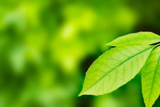Free Beautiful Fresh Leaves With Water Drops Royalty Free Stock Photo - 19634445