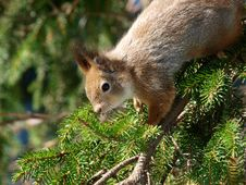 Free Squirrel Stock Photo - 19634820