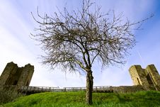 Free Lonely Tree Nearby Fortress Royalty Free Stock Photography - 19636357