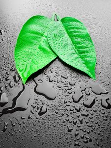 Free Green Leafs Royalty Free Stock Photography - 19637667