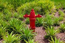 Free Fire Water Hydrant Stock Photos - 19638303