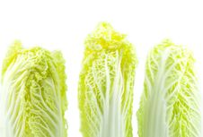 Free Lettuce Royalty Free Stock Photo - 19639065