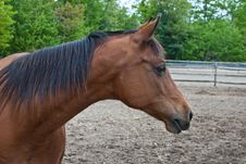 Free Brown Horse Headshot Stock Photography - 19639982