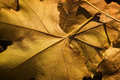 Free Close Up Of A Autumn Leaves Stock Images - 19645704