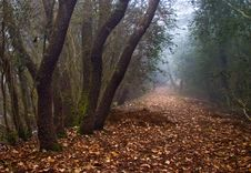 Path In The Mist Royalty Free Stock Image