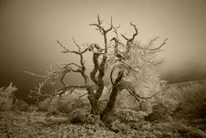 Free Rime Tree Royalty Free Stock Images - 19640599