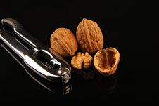 Free Walnuts Stock Photos - 19641133