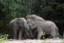 Free Elephant Family Stock Photography - 19642292