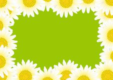 Free Daisy With Drops Royalty Free Stock Image - 19643456