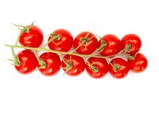 Free Tomatoes Stock Photo - 19643820