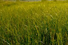 Free Morning Dewy Grass Royalty Free Stock Photography - 19644047