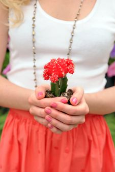 Free Woma S Hands Holding Cactus Royalty Free Stock Images - 19644099