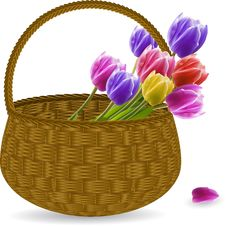 Free Tulips In A Wicker Basket Stock Images - 19644214