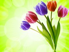 Free Tulips On A Green Background Royalty Free Stock Photo - 19644345