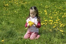 Free Little Girl Collect Flowers Royalty Free Stock Image - 19644976