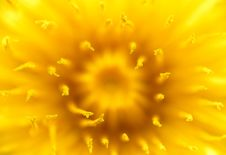Free Macro Shot Of Dandelion Royalty Free Stock Photography - 19644997
