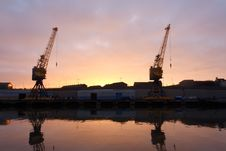 Morning Cranes Stock Photo