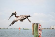 Free Pelican In Flight Royalty Free Stock Image - 19646706