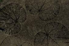 Free Circular Leaf Emboss Stock Photography - 19647082