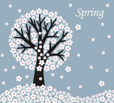 Free Flower Tree Stock Photo - 19649430