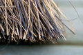 Free Broom Stock Image - 19657491