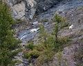 Free Mountain Goats Royalty Free Stock Image - 19657786