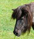Free Portrait Of A Brown Horse In A Meadow Royalty Free Stock Photo - 19658905