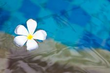 Free Floating Plumeria Stock Photos - 19650073