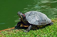 Free Turtle Stock Photography - 19651092