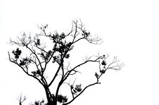 Free Branches Of Dead Tree Royalty Free Stock Images - 19651429