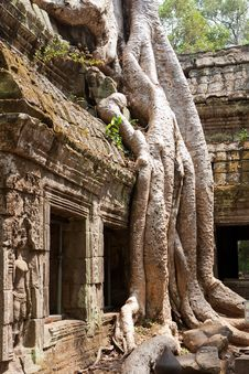 Free Ta Phrom Temple Royalty Free Stock Photo - 19653445