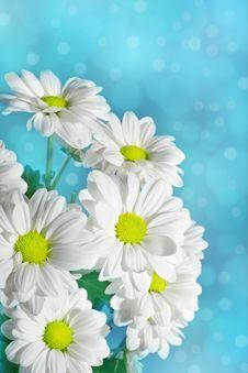Free Daisies Flowers Royalty Free Stock Photos - 19653898