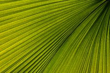 Palm Leaf Venation Royalty Free Stock Photos