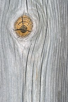 Free Oak Plank Royalty Free Stock Photography - 19657637