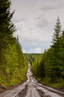 Free Road To Forest Royalty Free Stock Photos - 19658428