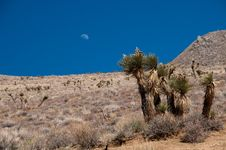 Free Moon Over The Desert Stock Photo - 19659920