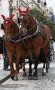 Free Horses In Prague Royalty Free Stock Photo - 19666545
