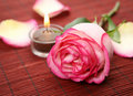 Free Rose And Candle Royalty Free Stock Photo - 19667285