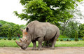 Free White Rhino Stock Image - 19668311