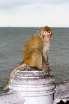 Free Monkey Stock Images - 19662104