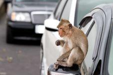 Free Monkey Stock Photos - 19662123