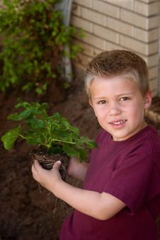 Free Young Boy Helping In The Garden Royalty Free Stock Photography - 19662327