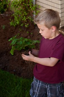 Free Little Boy Looking At A Plant Royalty Free Stock Images - 19662329